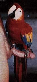 Autoportrait au perroquet