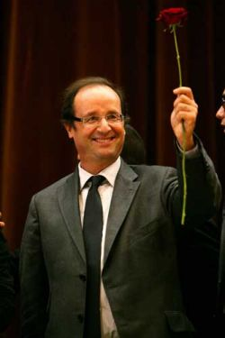 Hollande rose